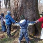 A fa élete