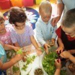 Ovis salátakészítés