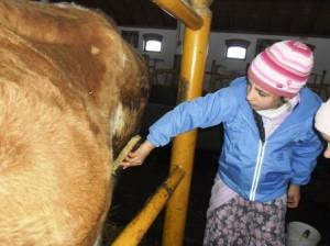 Gyerekek a tehenészetben