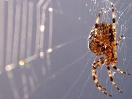 A pók